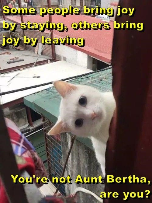 Cat - Some people bring joy by staying, others bring joy by leaving You're not Aunt Bertha are you?
