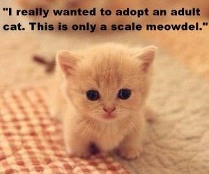 """Cat - """"I really wanted to adopt an adult cat. This is only a scale meowdel."""""""