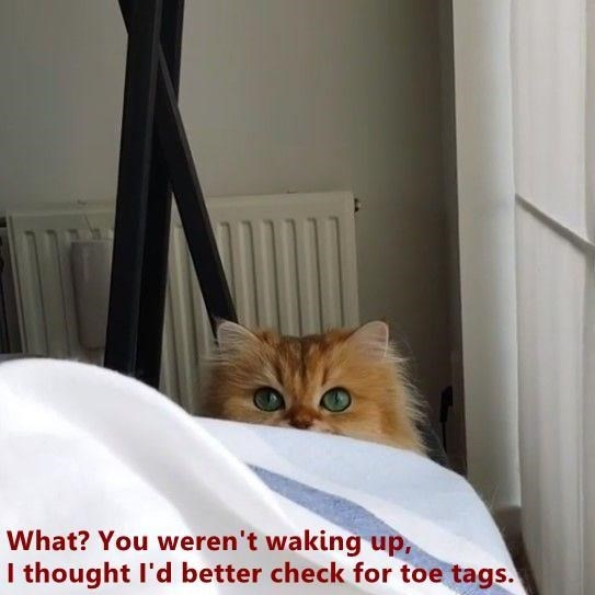 Cat - What? You weren't waking up, I thought I'd better check for toe tags.