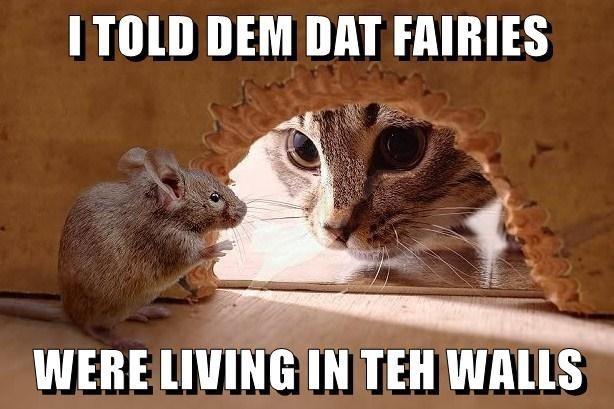Gerbil - I TOLD DEM DAT FAIRIES WERE LIVING IN TEH WALLS