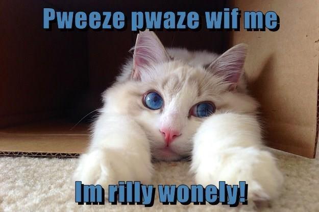 Cat - Pweeze pwaze wif me Imrilly wonely!
