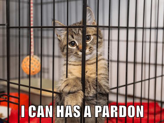 Cat - I CAN HAS A PARDON