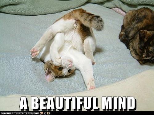 Cat - ABEAUTIFUL MIND CANHASCHEE2EURGER cOM