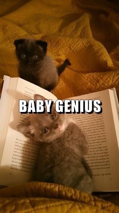 Cat - BABY GENIUS he