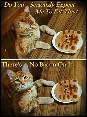 Cat - Do You Seriously Expect Me To Eat This? There's No Bacon On It. YankecBernice