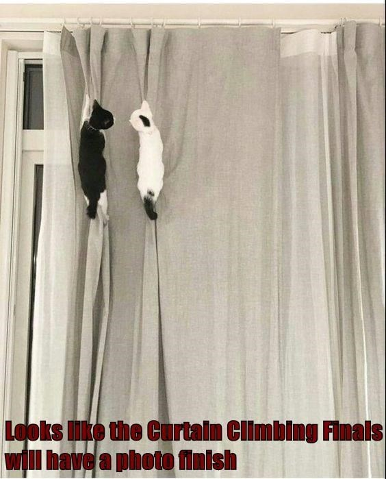 White - Looks ke the Curtain Climbing Finals will have a photo finish