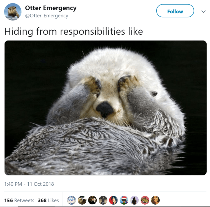 Wildlife - Otter Emergency Follow @Otter_Emergency otter Emerge Hiding from responsibilities like 1:40 PM 11 Oct 2018 156 Retweets 368 Likes