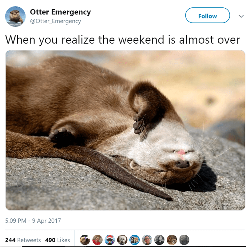 Photo caption - Otter Emergency Follow @Otter_Emergency tter marges When you realize the weekend is almost over 5:09 PM 9 Apr 2017 244 Retweets 490 Likes