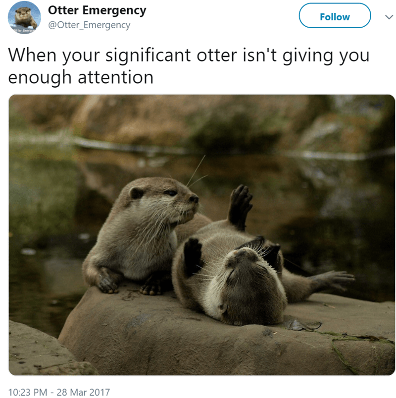 Gopher - Otter Emergency Follow @Otter_Emergency When your significant otter isn't giving you enough attention 10:23 PM 28 Mar 2017