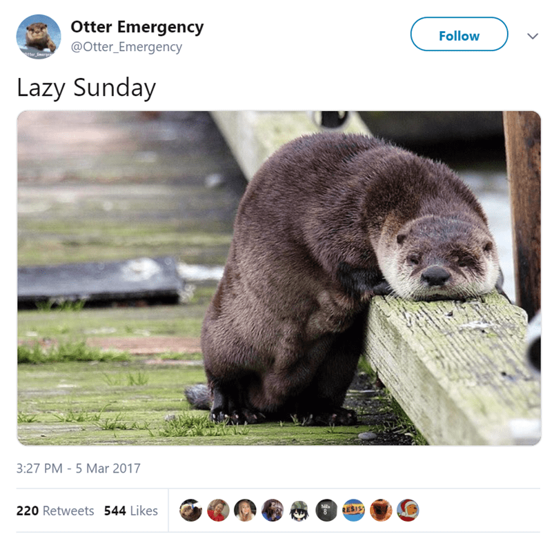 Wildlife - Otter Emergency Follow @Otter_Emergency otter E Lazy Sunday 3:27 PM 5 Mar 2017 220 Retweets 544 Likes RESIS)