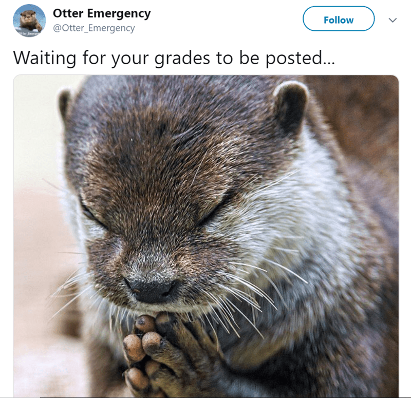 Terrestrial animal - Otter Emergency Follow @Otter_Emergency ter rg Waiting for your grades to be posted...