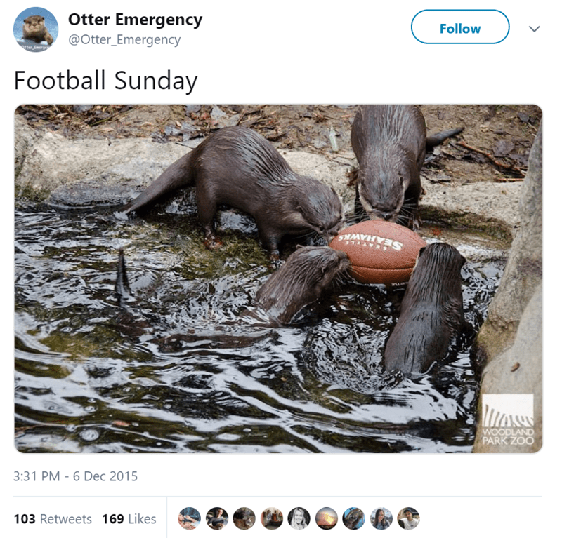 Wildlife - Otter Emergency Follow @Otter_Emergency Football Sunday SEAHAWN MOSS WOODLAND PARK ZOO 3:31 PM - 6 Dec 2015 103 Retweets 169 Likes