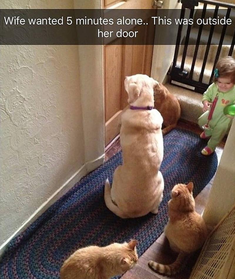 snapchat pets funny - 9254808576