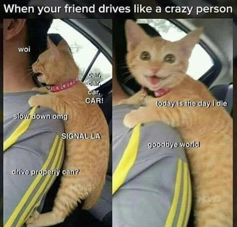 Caturday meme about sitting in a car with a reckless driver