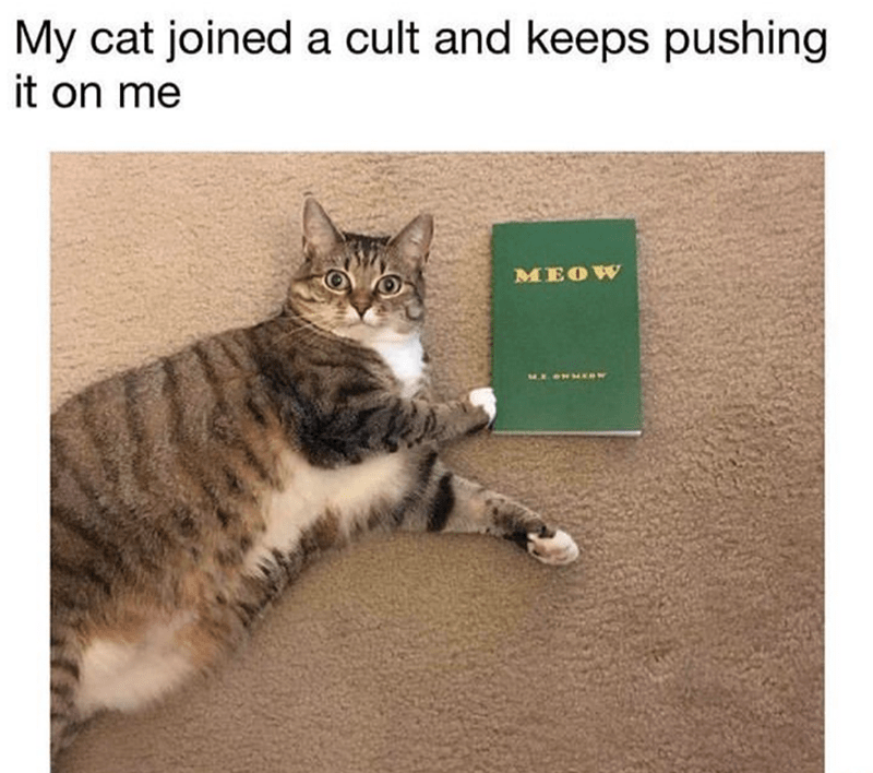Caturday meme about recruiting for a cat cult