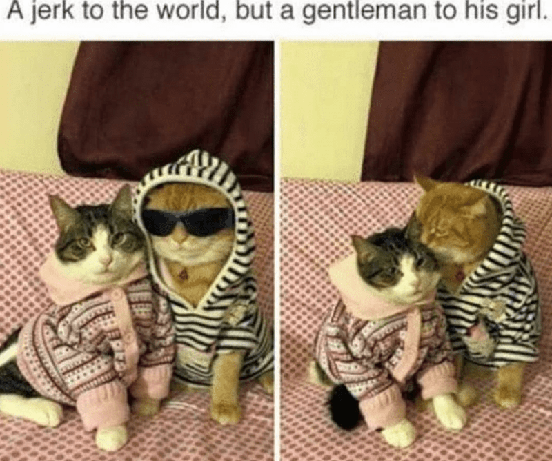 Caturday meme about a douchebag cat only being nice to his girlfriend
