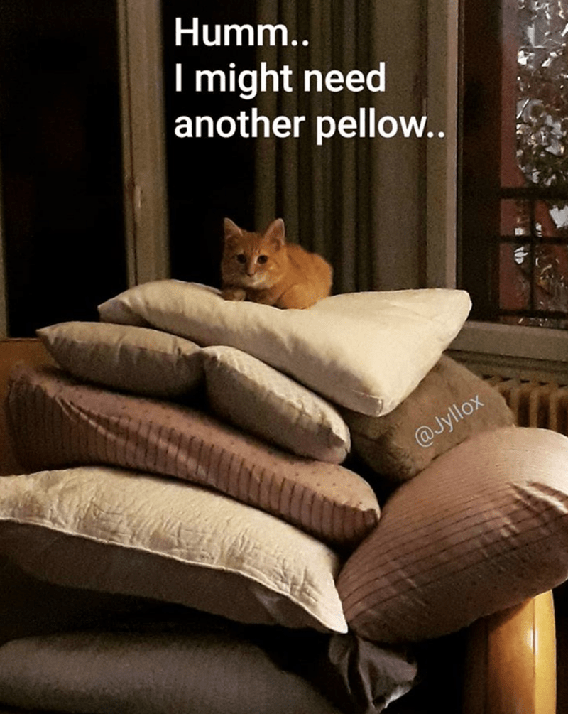 Caturday meme about a spoiled kitten on a pile of pillows