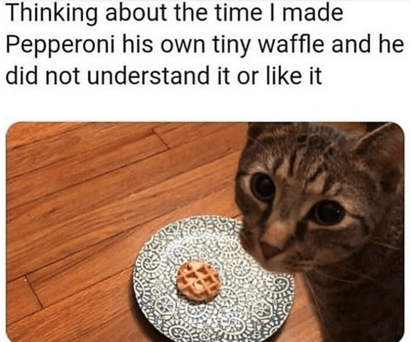 Caturday meme about cats not liking waffles