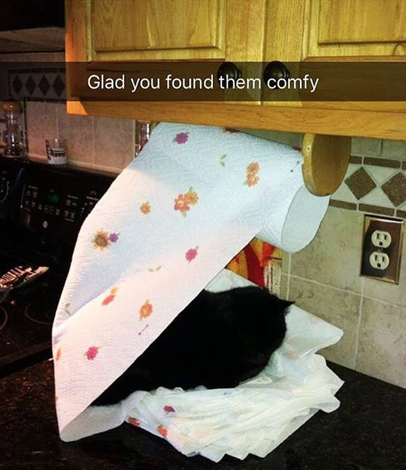Caturday meme of a cat sleeping in a pile of paper towels