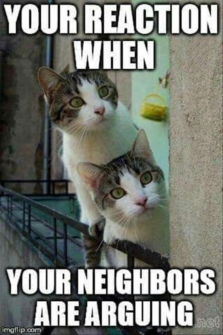 Caturday meme about getting nose when your neighbors fight