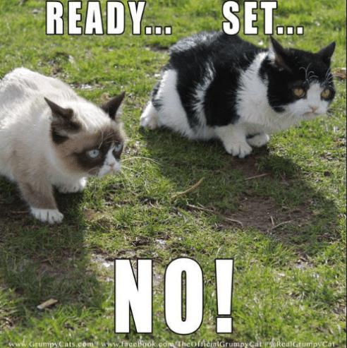 grumpy - Cat - READY.. SET. NO! www.Grumpy Cats.comwfacebook.comTheofficialGrumpy Cat RealGrumpyCa
