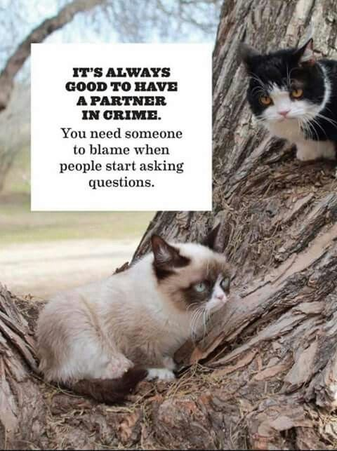 grumpy - Cat - IT'S ALWAYS GOOD TO HAVE A PARTNER IN CRIME You need someone to blame when people start asking questions