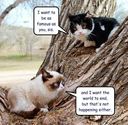 grumpy - Cat - I want to be as famous as you, sis. and I want the world to end, but that's not happening either.