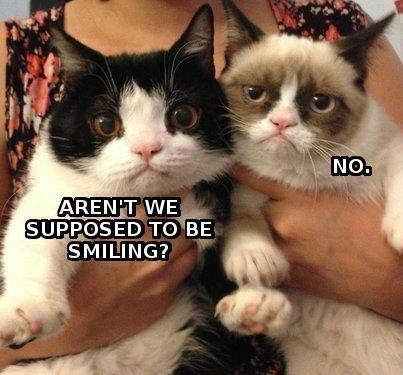 grumpy - Cat - NO. ARENT WE SUPPOSED TO BE SMILING?