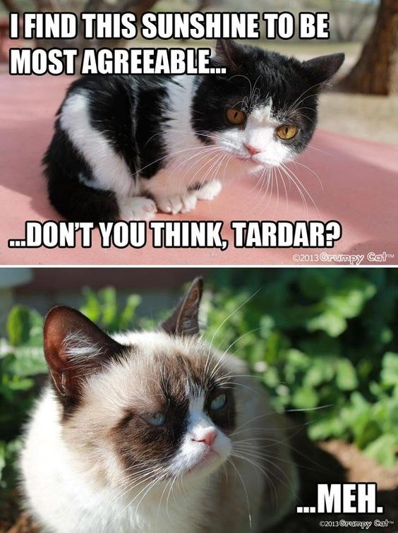 grumpy - Cat - IFIND THIS SUNSHINE TO BE MOST AGREEABLE. DONT YOU THINK, TARDAR? 2013 Crumpy Cat .MEH. c2013@mpy CatM