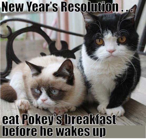grumpy - Cat - New Year's Resolution eat Pokey's breakfast before he wakes up