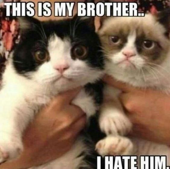 grumpy - Cat - THISIS MYBROTHER IHATE HIM.