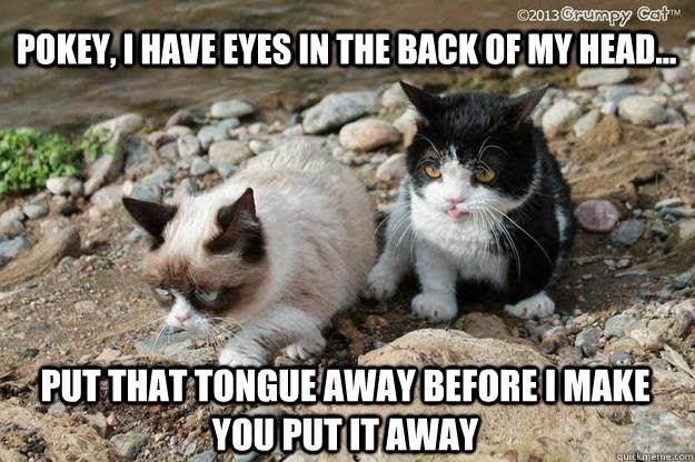 grumpy - Cat - 02013 @rumpy Cat POKEY,I HAVE EYES IN THE BACK OF MY HEAD PUT THAT TONGUEAWAY BEFOREOMAKE YOU PUTITAWAY quickmeme.com