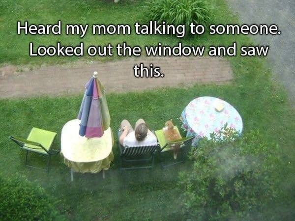 Grass - Heard my mom talking to someone. Looked out the window and saw this.