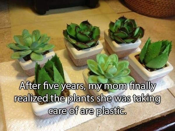 Flowerpot - After five years, my mom finally realized the plants she was taking care of are plastic.