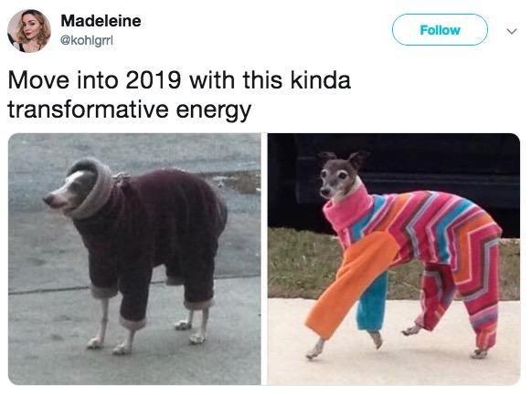 Canidae - Madeleine Follow @kohlgrri Move into 2019 with this kinda transformative energy