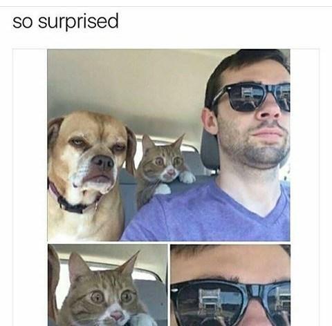 Face - so surprised