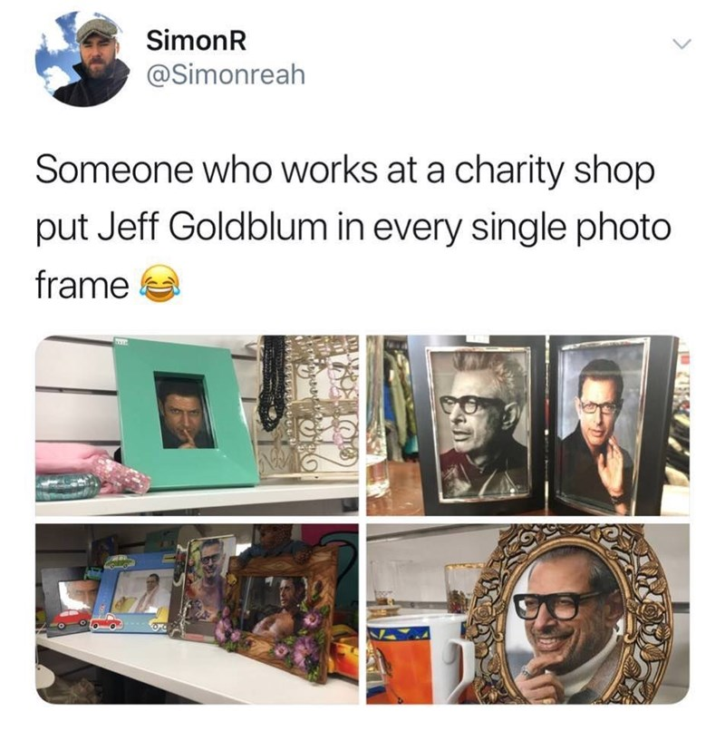 Product - SimonR @Simonreah Someone who works at a charity shop put Jeff Goldblum in every single photo frame