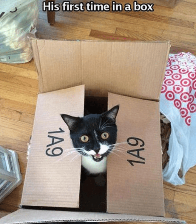Cat - His first time in a box 1A9