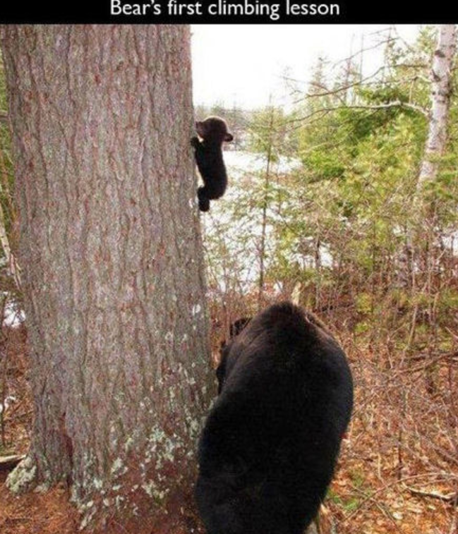 Tree - Bear's first climbing lesson
