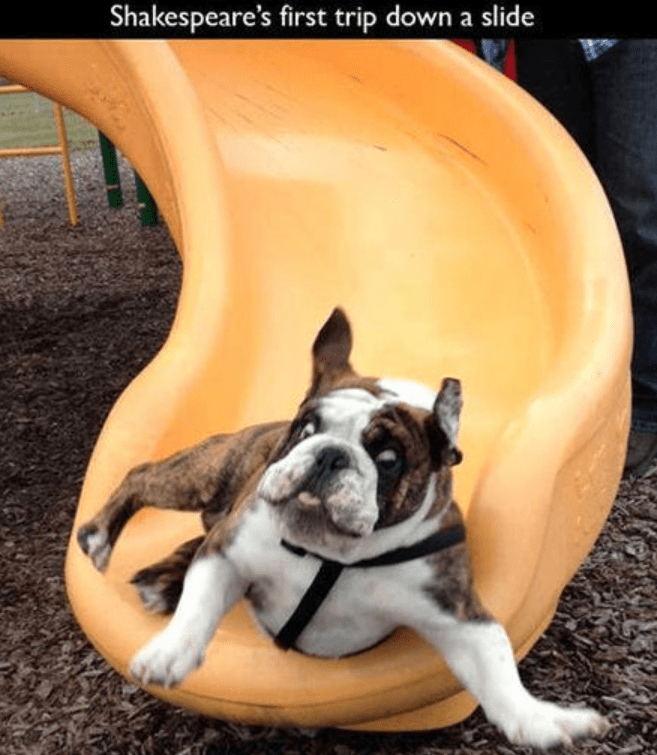 Dog - Shakespeare's first trip down a slide
