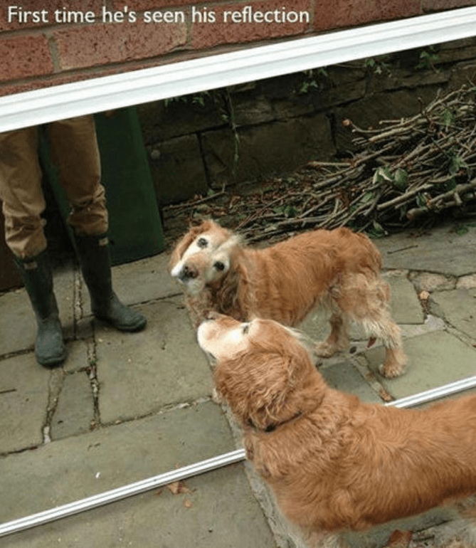 Dog - First time he's seen his reflection