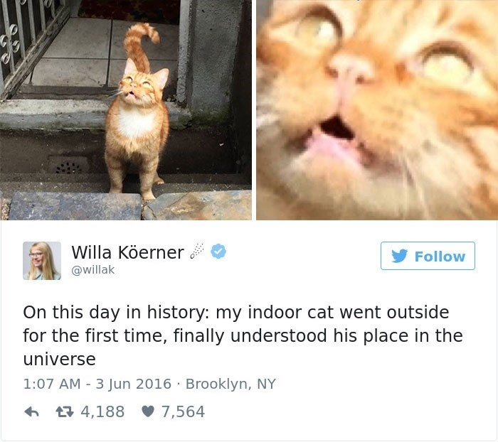 Cat - Willa Köerner Follow @willak On this day in history: my indoor cat went outside for the first time, finally understood his place in the universe 1:07 AM 3 Jun 2016 Brooklyn, NY 4,188 7,564