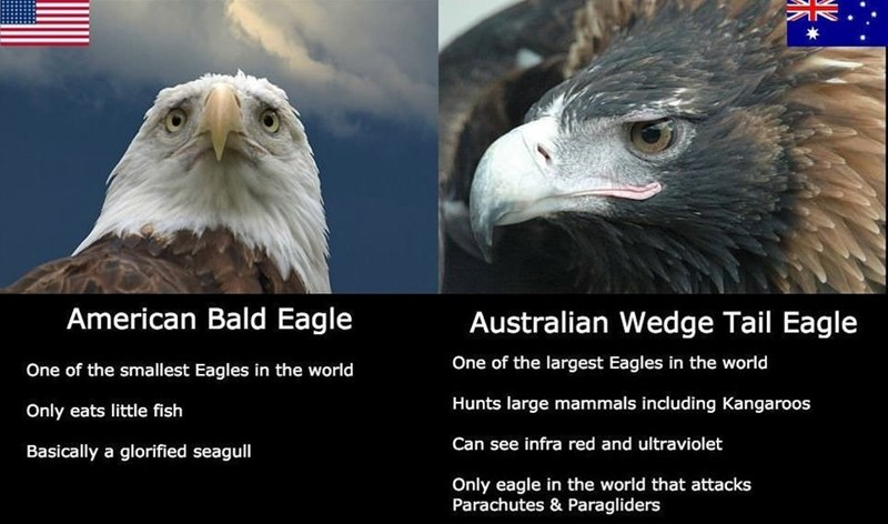 Bird - American Bald Eagle Australian Wedge Tail Eagle One of the largest Eagles in the world One of the smallest Eagles in the world Hunts large mammals including Kangaroos Only eats little fish Can see infra red and ultraviolet Basically a glorified seagull Only eagle in the world that attacks Parachutes & Paragliders
