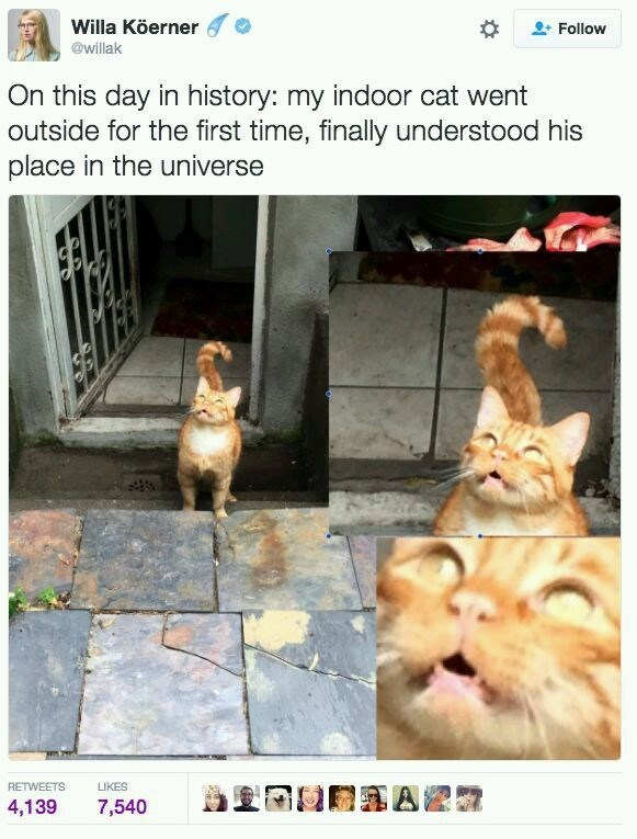 "Tweet that reads, ""On this day in history: my indoor cat went outside for the first time, finally understood his place in the universe"" above pics of a cat looking shocked going outside"