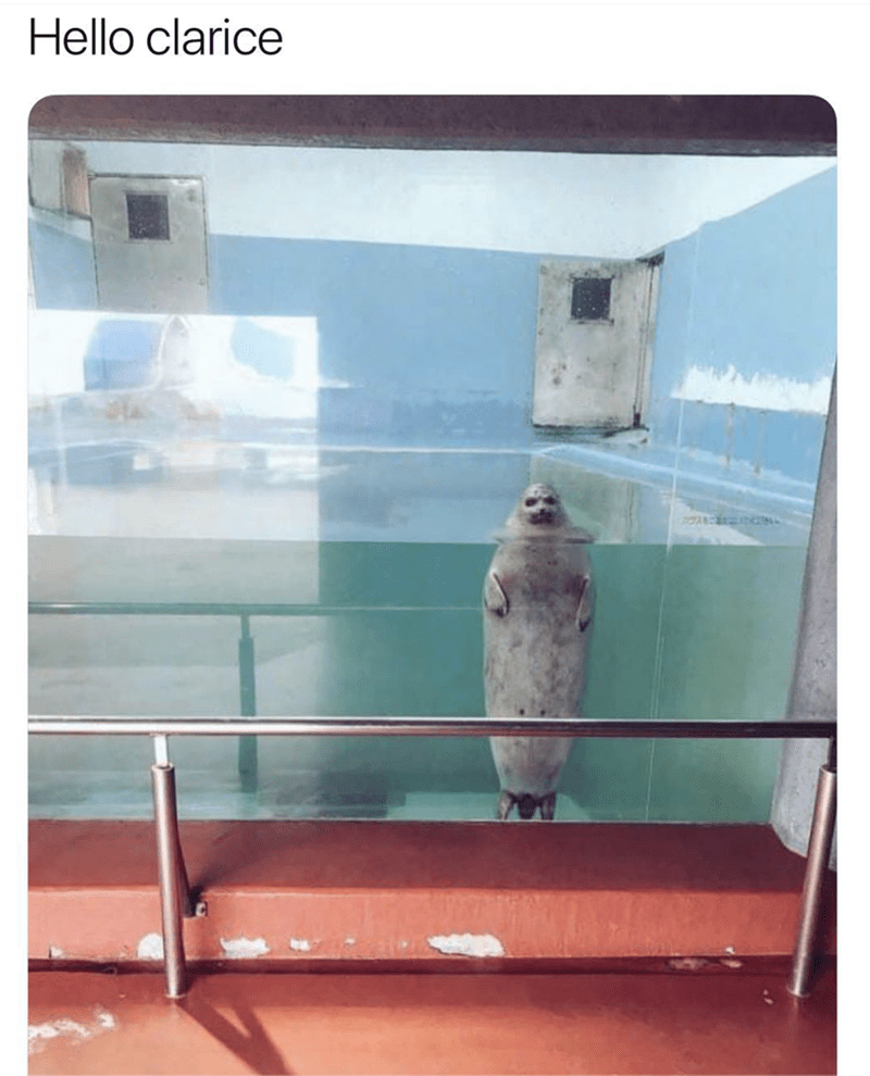 "Caption that reads, ""Hello Clarice"" above a creepy pic of a seal in an aquarium"