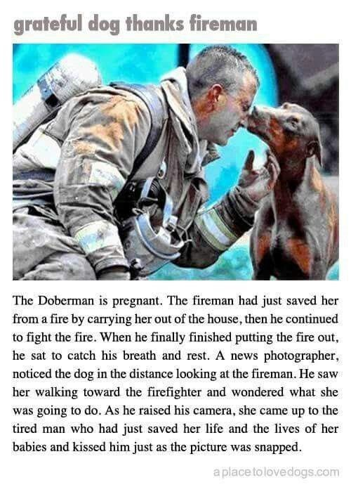 dog kissed a firefighter after rescued her and her puppies