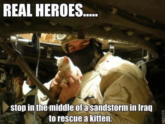 Gesture - REAL HEROES. UXULM stop in the middle of a sandstorm in Iraq to rescue a kitten. ROFLBOT BOY