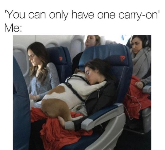 woman holding a dog in her arms on a plane