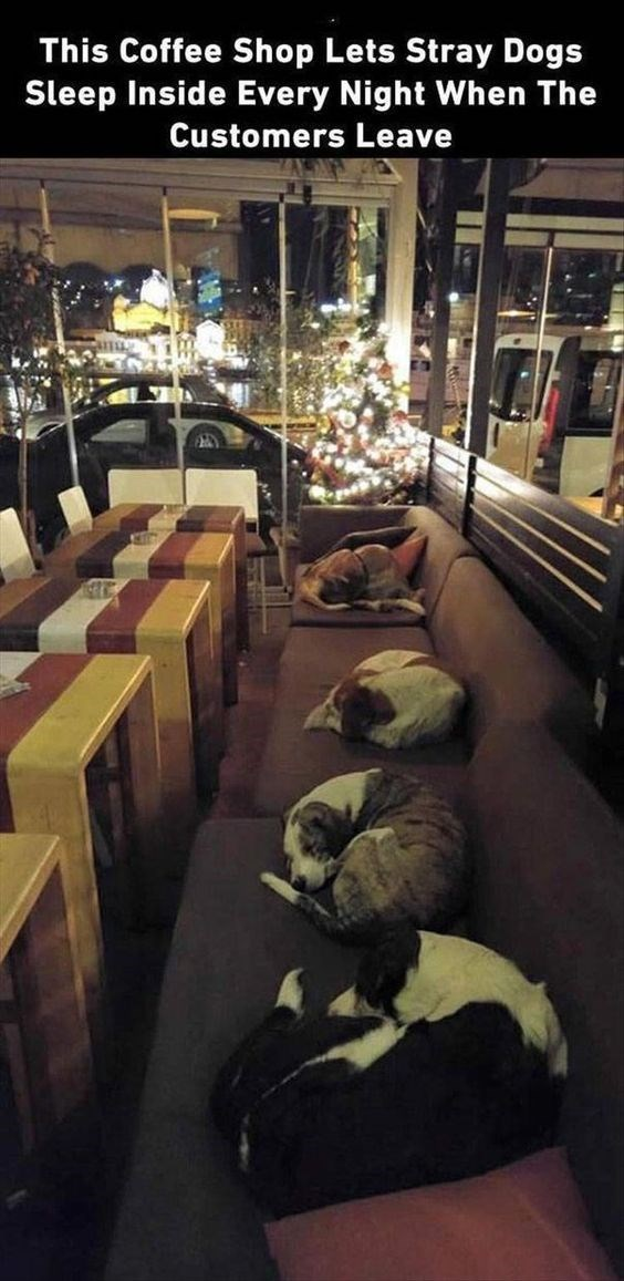Christmas tree - This Coffee Shop Lets Stray Dogs Sleep Inside Every Night When The Customers Leave