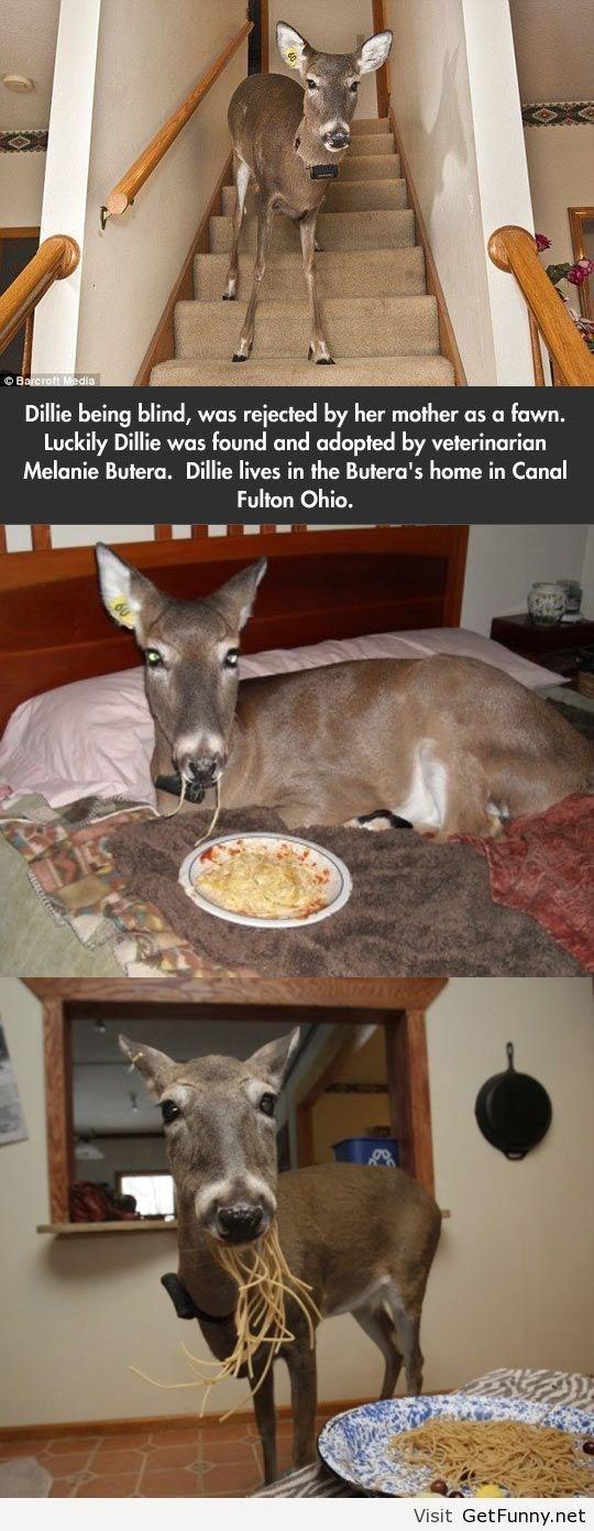 blind deer adopted by a vet